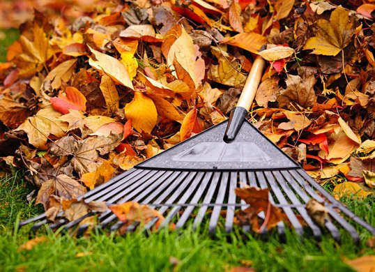 Modified Leaf Collection Schedule Week of Thanksgiving
